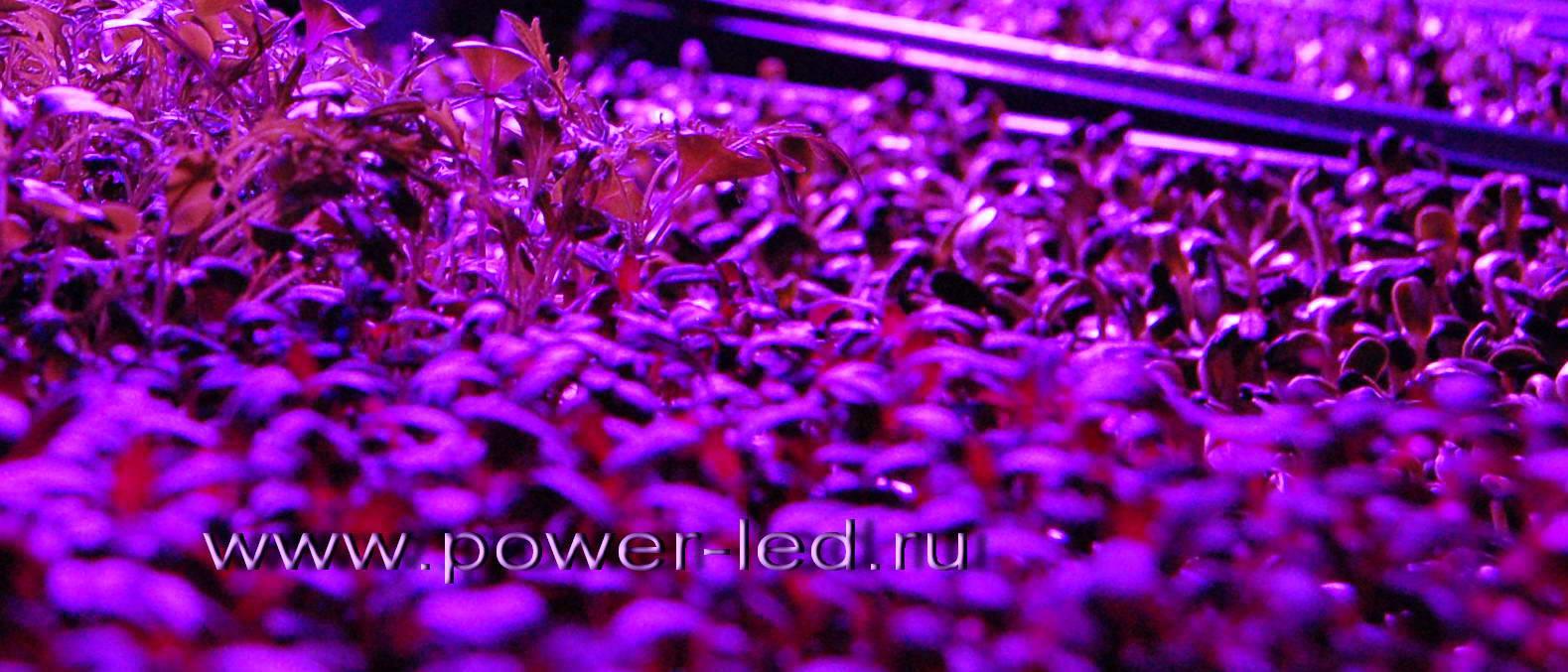 Освещение рассады биосветильником